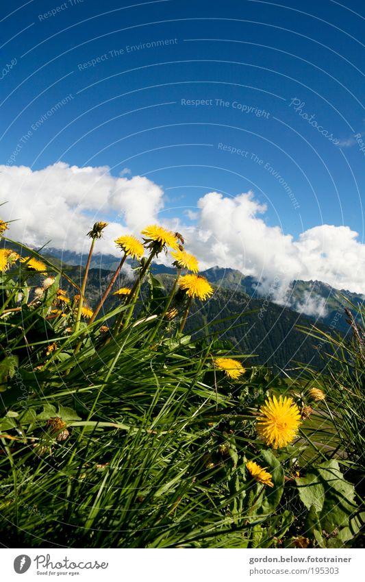 dem Himmel entgegen Berge u. Gebirge Natur Landschaft Pflanze Wolken Frühling Schönes Wetter Wiese Menschenleer Erholung Blick saftig wild blau gelb grün