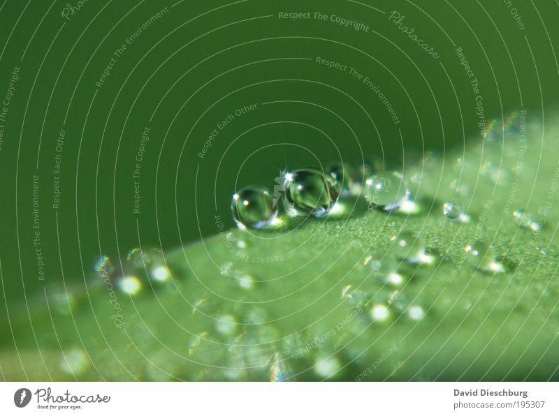 Pearlfriends for a short time Natur Pflanze grün Sommer Blatt schwarz Leben Frühling Regen glänzend frisch Wassertropfen nass Tropfen harmonisch Kugel