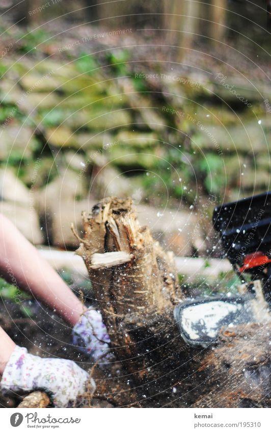 Maschinen- vs. Handarbeit Arme Natur Pflanze Baum Grünpflanze Baumstumpf Garten Wald Handschuhe Gartenhandschuhe Holz Späne Sägespäne Sägemehl Motorsägenblatt