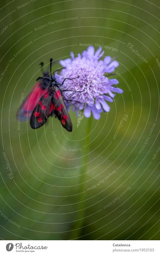 Frühstücken Natur Pflanze Sommer grün rot Tier schwarz Umwelt Blüte Zusammensein Design Zufriedenheit Feld ästhetisch Blühend Schönes Wetter