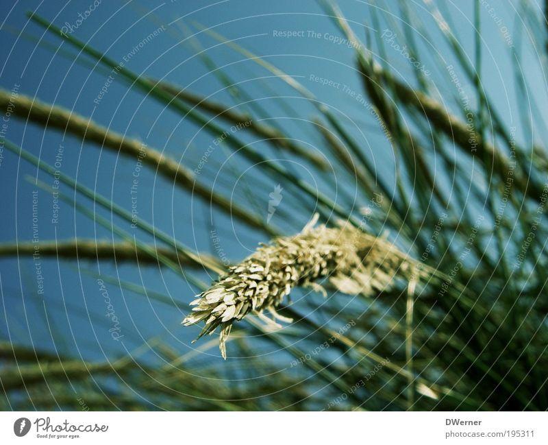 Sehnsucht nach dem Sommer! schön Himmel grün blau Pflanze Strand Ferien & Urlaub & Reisen ruhig Farbe Wiese Gefühle Blüte Gras Bewegung träumen