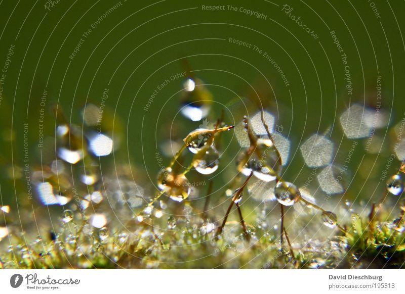 Tropfenmonopol Natur weiß grün Sommer Pflanze Leben Gras Frühling Regen nass Wassertropfen Kugel Stengel feucht Tau