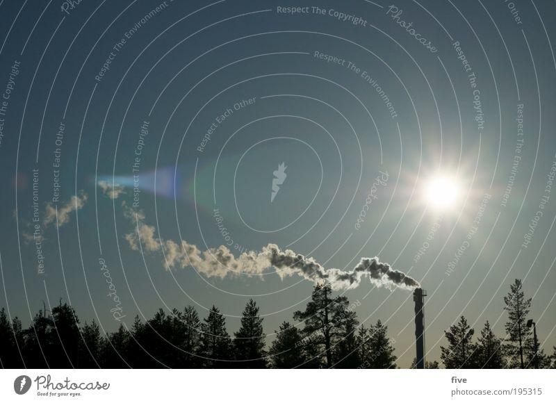 richtung ivalo Natur Baum Pflanze Sonne Ferien & Urlaub & Reisen Winter Ferne Wald Freiheit Umwelt hell Unendlichkeit leuchten Abgas Umweltverschmutzung