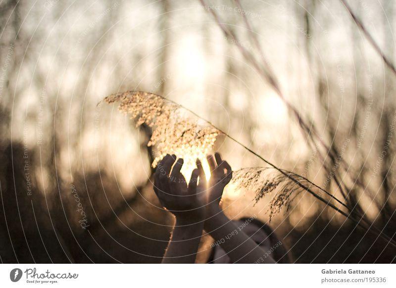 Gold pflücken Mensch Natur Hand Pflanze ruhig Gefühle Bewegung Wärme hell Stimmung Umwelt gold frei Hoffnung Sträucher Vertrauen