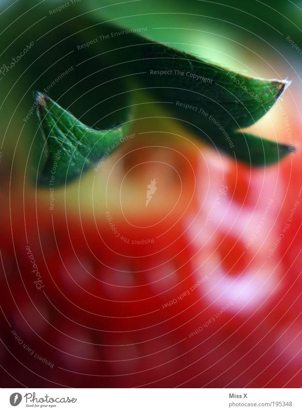Erdbeere Natur schön rot Blatt Frucht Lebensmittel Ernährung süß genießen lecker Bioprodukte Beeren Festessen saftig Erdbeeren Büffet