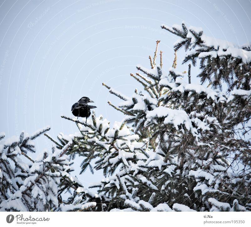 tschüß Winterzeit...hallo Sommerzeit Natur Baum Pflanze Tier Schnee Landschaft Vogel Umwelt Wildtier frieren Schönes Wetter Krähe