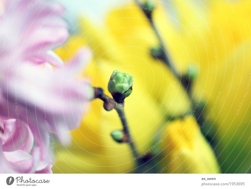 Frühlingsgefühle Natur Pflanze Farbe grün Blume Umwelt gelb Leben Lifestyle Stil Garten rosa Park Wachstum Dekoration & Verzierung