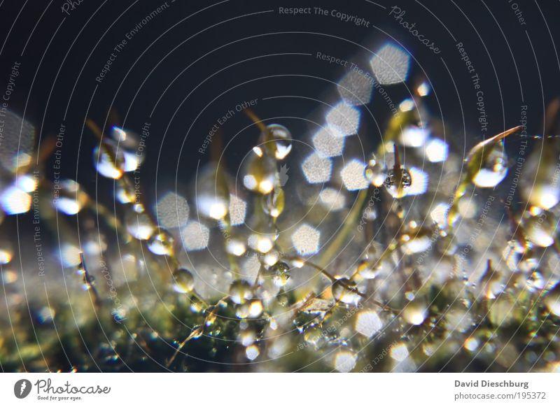 Metropolis of tears Natur weiß Sommer Pflanze Frühling Regen nass Wassertropfen Tropfen Stengel feucht Halm Tau Moos harmonisch silber