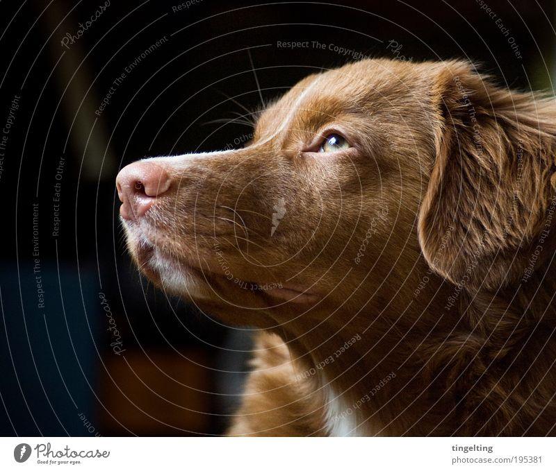 sunshine Tier Haustier Hund Fell 1 genießen Blick Freundlichkeit Glück hell kuschlig Wärme weich braun grün schwarz Schnauze Hängeohr Auge Nase rosa Schatten