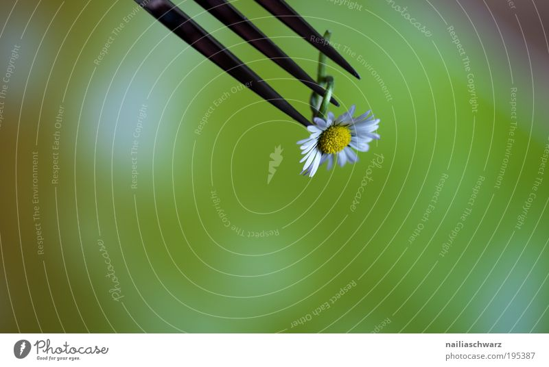 Ich ess Blumen Natur grün schön Pflanze gelb Gesundheit Lebensmittel Ernährung Lifestyle Wellness rein genießen Gänseblümchen positiv silber