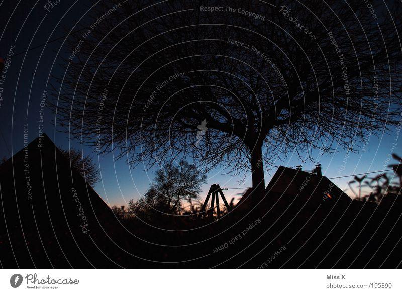blaue H Baum Haus dunkel Garten Stern Ast Schönes Wetter Baumkrone Geäst Zweige u. Äste