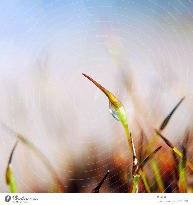 ohne Moos... Pflanze Wassertropfen Tau Makroaufnahme Sporen Samen