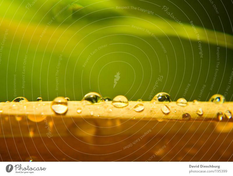 Feuchter Frühling Leben harmonisch Natur Pflanze Wassertropfen Sommer Regen Blatt Urwald gelb grün silber Tau Linie Tropfen nass feucht Farbfoto mehrfarbig