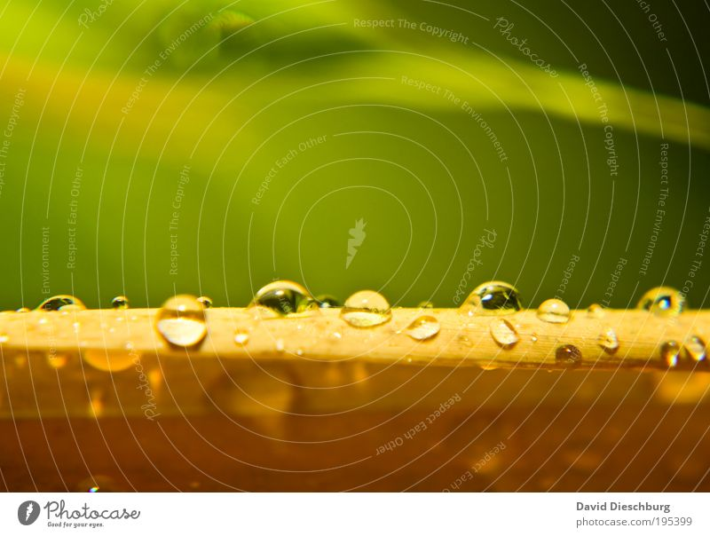 Feuchter Frühling Natur grün Sommer Pflanze Blatt gelb Leben Linie Regen nass Wassertropfen Tropfen Urwald feucht Tau