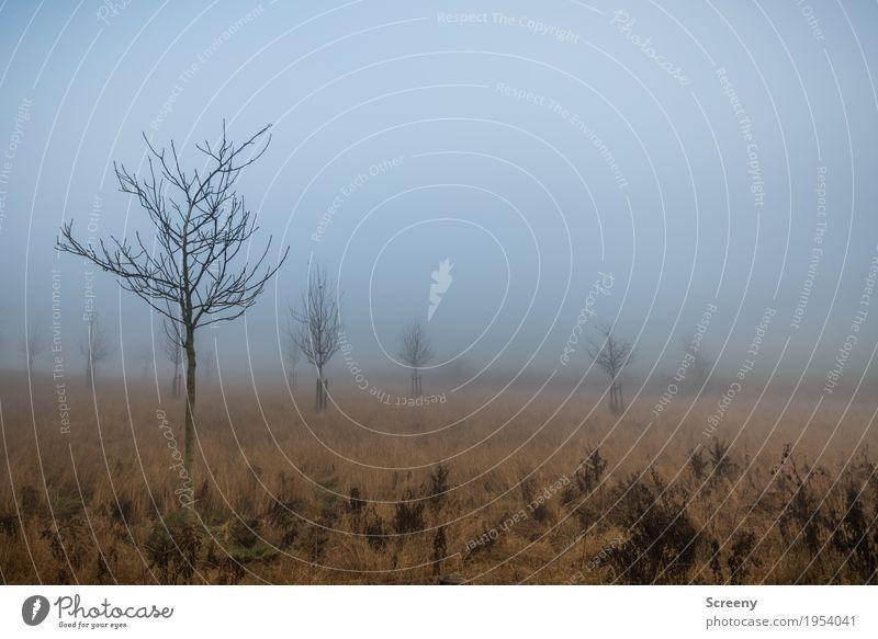 Neblige Aussichten Natur Pflanze Baum Landschaft ruhig Umwelt Herbst Wiese Gras Nebel Feld Sträucher