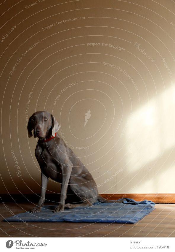 Ein Hund. schön Tier Wand Mauer braun dreckig Wohnung Fassade sitzen Sicherheit authentisch einfach Häusliches Leben beobachten natürlich