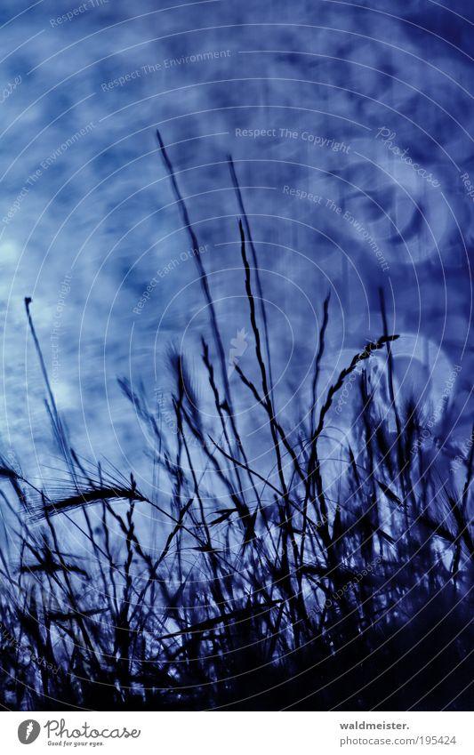 Sommerbild Natur Landschaft Pflanze Gras Seeufer Erholung ästhetisch Spiegellinsenobjektiv (Effekt) Unschärfe Farbfoto Außenaufnahme Experiment
