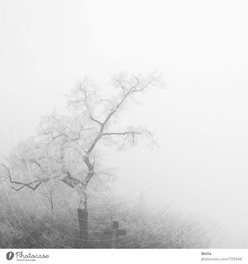 Morgenstille Umwelt Natur Landschaft Winter Klima Klimawandel Wetter Nebel Eis Frost Pflanze Baum Sträucher Zeichen Kreuz gruselig hell kalt trist grau weiß