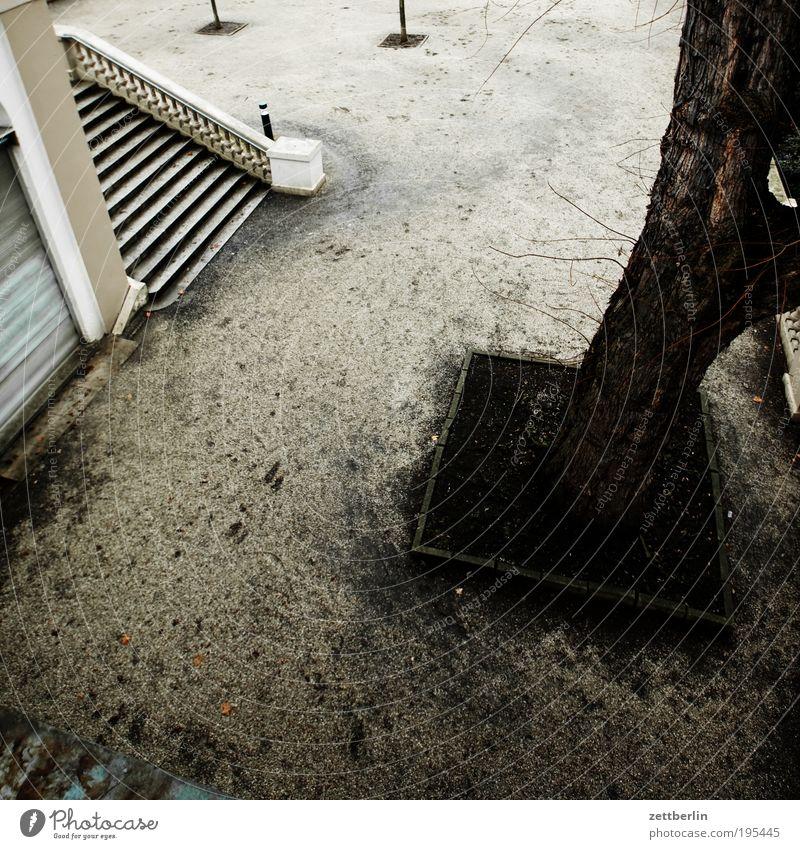 Park Treppe Freitreppe Baum Baumstamm Baumscheibe Natur Wege & Pfade Spazierweg Spaziergang Erholung karg trist Traurigkeit Menschenleer Friedhof März Neukölln