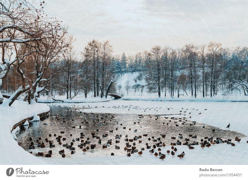 Enten und Seagull Birds auf gefrorenem See im Winter Schnee Umwelt Natur Landschaft Tier Wasser Himmel Wolken Wetter Schneefall Park Wildtier Vogel Tiergruppe