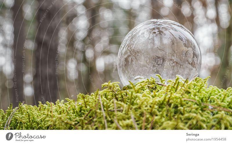 Dünnhäutig Natur schön Wasser weiß Winter kalt Schnee außergewöhnlich grau liegen Eis ästhetisch einzigartig Frost gefroren Kugel