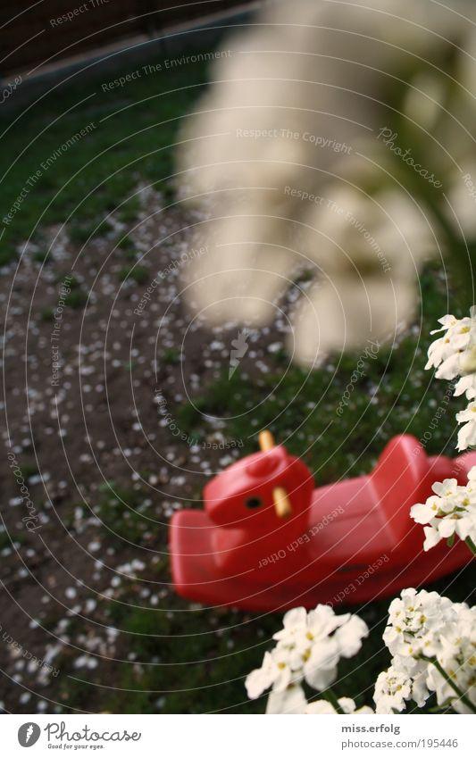 Pfaukelscherd alt schön grün weiß Sommer Pflanze rot Erholung Landschaft Blume Freude Umwelt Gefühle Gras Frühling Blüte