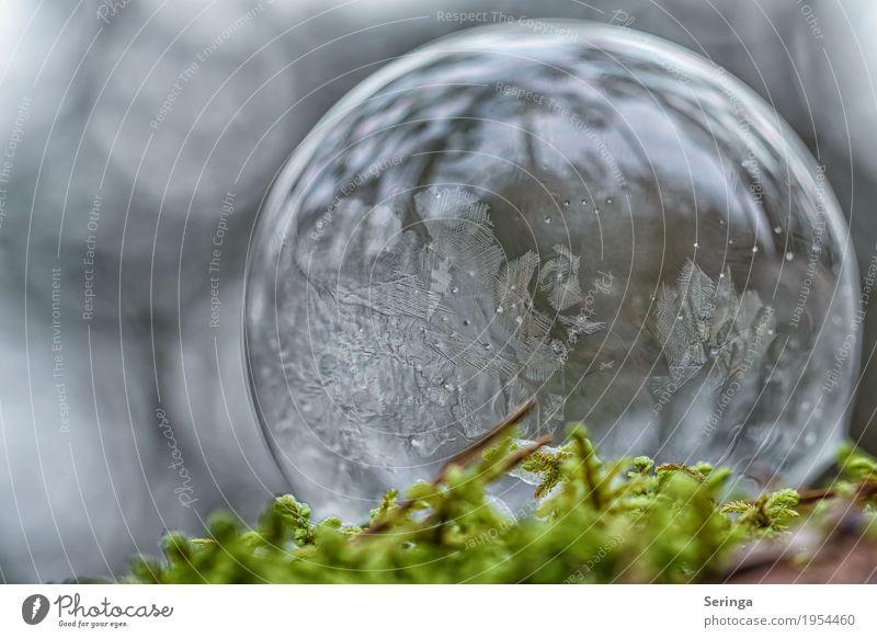 Seifenblase im Frostmantel Natur grün schön weiß Landschaft Winter kalt Schnee außergewöhnlich grau liegen Eis elegant ästhetisch einzigartig beobachten