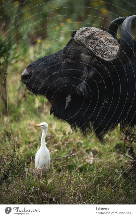 ziemlich beste Freunde Ferien & Urlaub & Reisen Tourismus Ausflug Abenteuer Ferne Safari Expedition Umwelt Natur Gras Wiese Tier Wildtier Vogel Tiergesicht