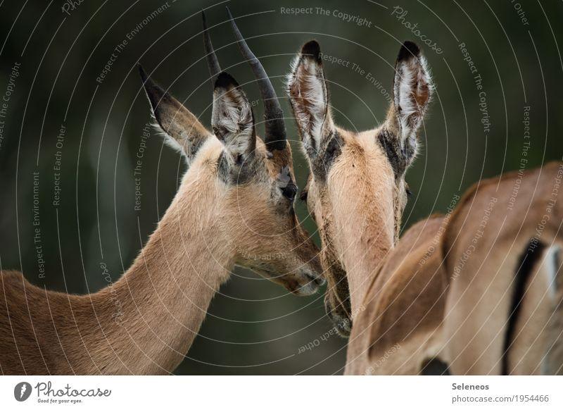 Geheimniskrämer Ferien & Urlaub & Reisen Sommer Tier Ferne Liebe Tourismus Zusammensein Ausflug Tierpaar Wildtier Abenteuer Sommerurlaub Afrika Tiergesicht