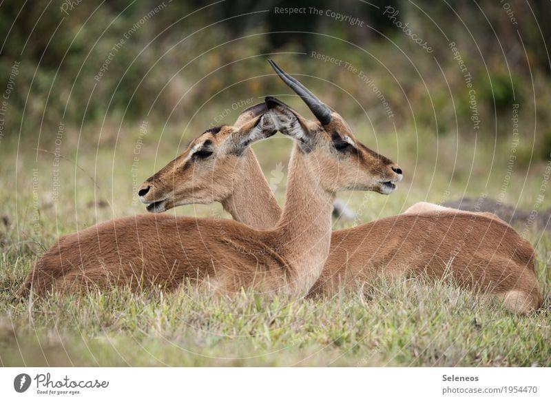 Zweisamkeit Natur Ferien & Urlaub & Reisen Sommer Erholung Tier Ferne Umwelt Freiheit Tourismus Ausflug Wildtier Abenteuer Sommerurlaub Tiergesicht Expedition