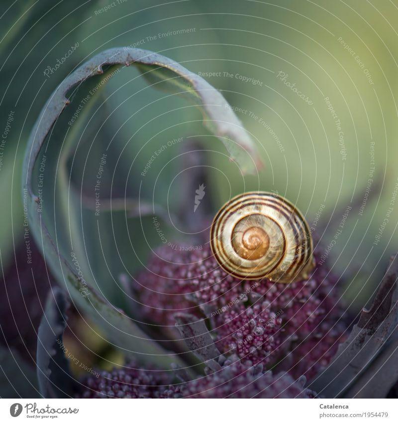 Kurvenreich Natur Pflanze Sommer grün Blatt Tier gelb Bewegung Garten braun Design Häusliches Leben Zufriedenheit Wachstum ästhetisch Schönes Wetter