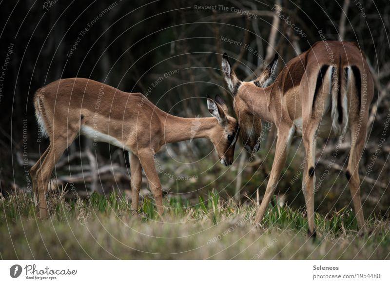. Natur Ferien & Urlaub & Reisen Sommer Tier Ferne Wald Tierjunges Umwelt Tourismus Ausflug Wildtier Abenteuer Sicherheit Schutz Vertrauen Tiergesicht