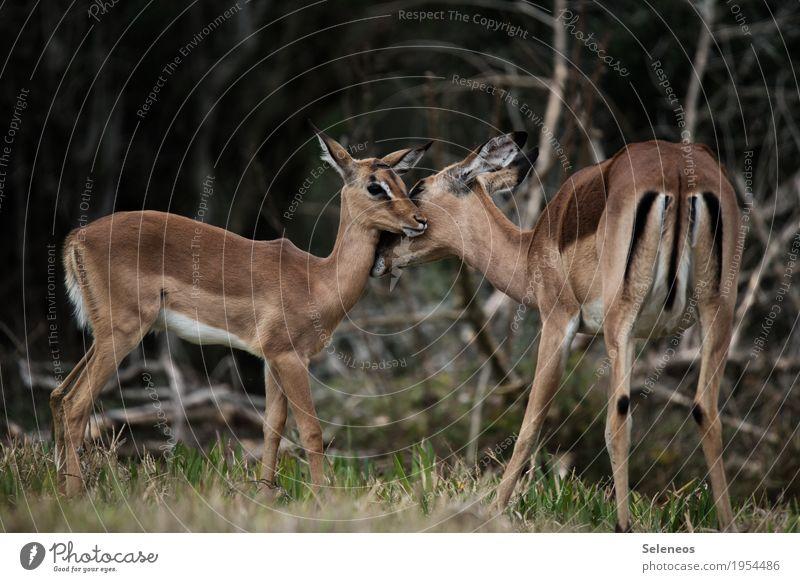 Tierliebe Ferien & Urlaub & Reisen Ferne Wald Tierjunges Freiheit Tourismus Ausflug Wildtier Abenteuer Expedition Verantwortung Safari Tierfamilie Mutterliebe