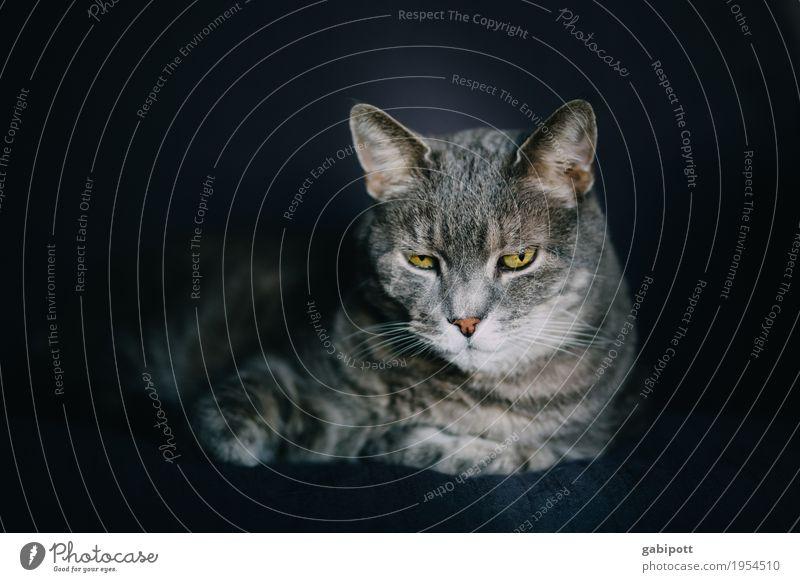 Katzenfoto - Sucht Tier Haustier Nutztier 1 Sympathie Freundschaft Tierliebe Treue Gelassenheit ruhig Müdigkeit Erholung Pause Farbfoto Gedeckte Farben