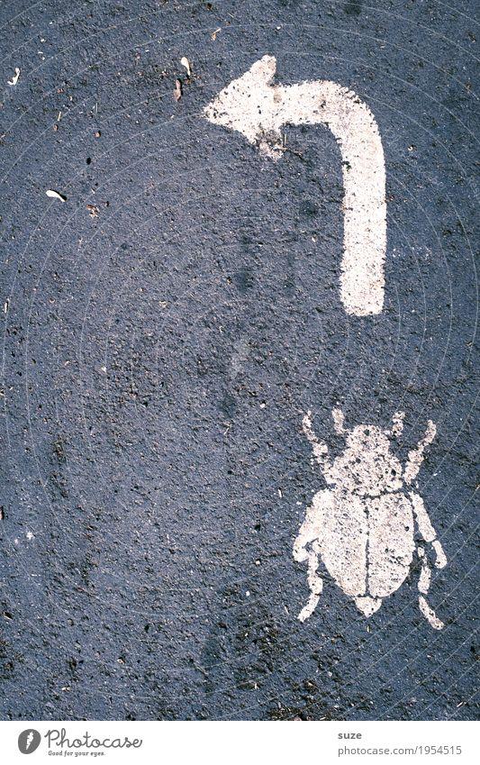 Bugfixes Umwelt Natur Tier Straße Wege & Pfade Käfer 1 Zeichen Schilder & Markierungen Pfeil krabbeln dreckig klein Neugier wild grau weiß Hilfsbereitschaft