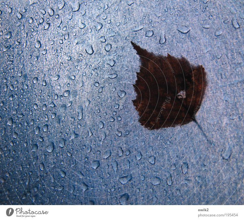 Schönes Wetter Natur Wasser blau Pflanze Blatt Frühling Regen braun Umwelt Wassertropfen nass Ausflug Wandel & Veränderung Klima Vergänglichkeit
