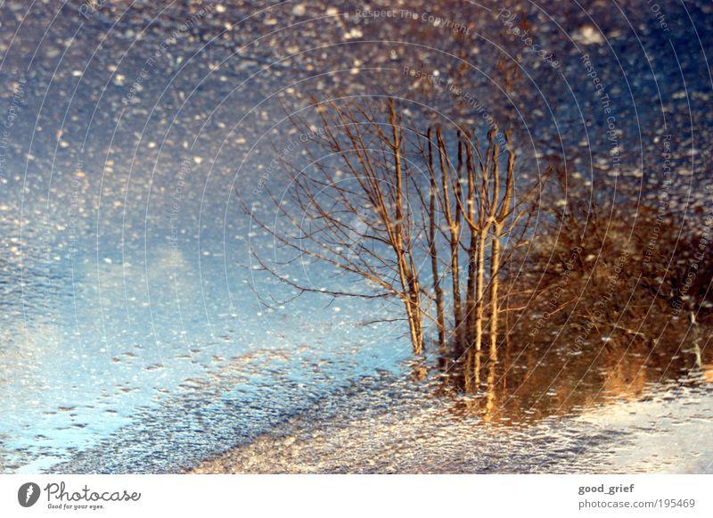 bis zum nächsten... Himmel Natur blau Baum Winter Blatt Umwelt Straße Herbst grau Park Regen braun Wetter dreckig glänzend