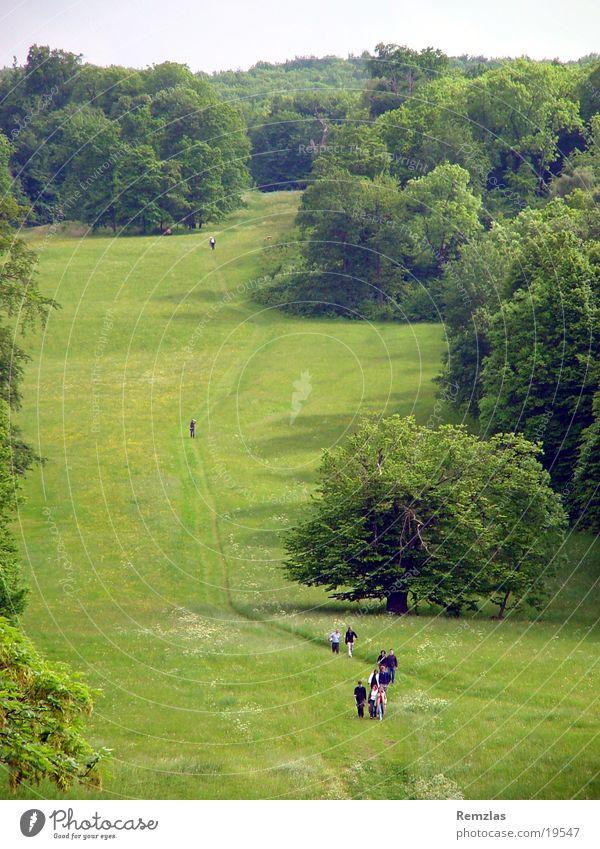 Spaziergang im Grünen wandern grün Wiese Baum Fußweg Frühlingstag Aussicht Natur