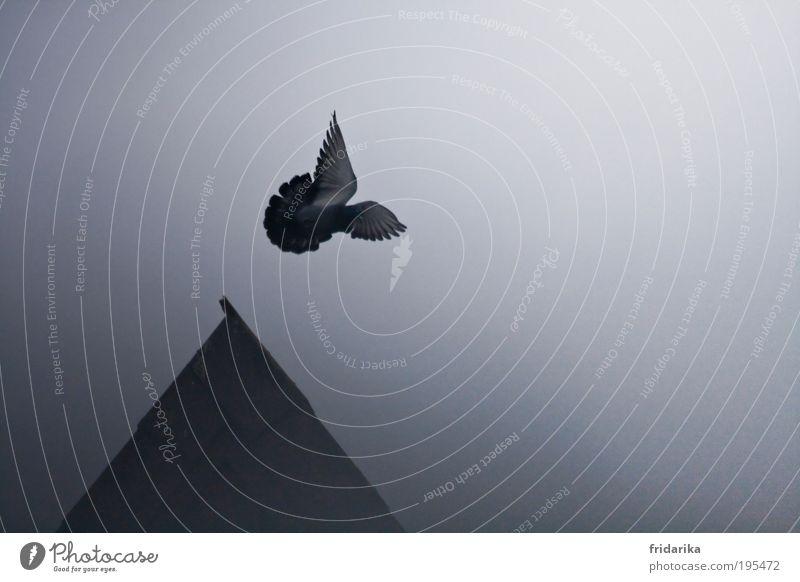 fly away with me Himmel schwarz Tier Haus Ferne Freiheit grau springen träumen Vogel Kraft Nebel fliegen wild ästhetisch Flügel