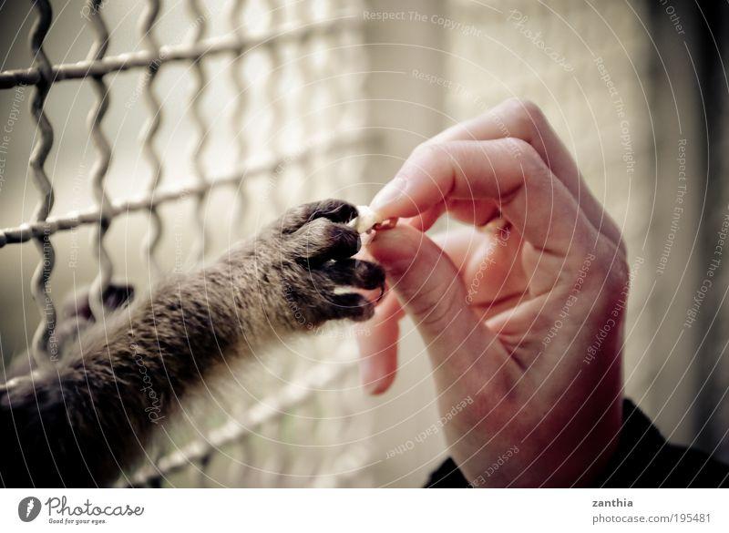 food Hand weiß schwarz Ernährung Einsamkeit Tier grau braun Armut Finger Hilfsbereitschaft Vertrauen Fell Zoo Neugier Wildtier