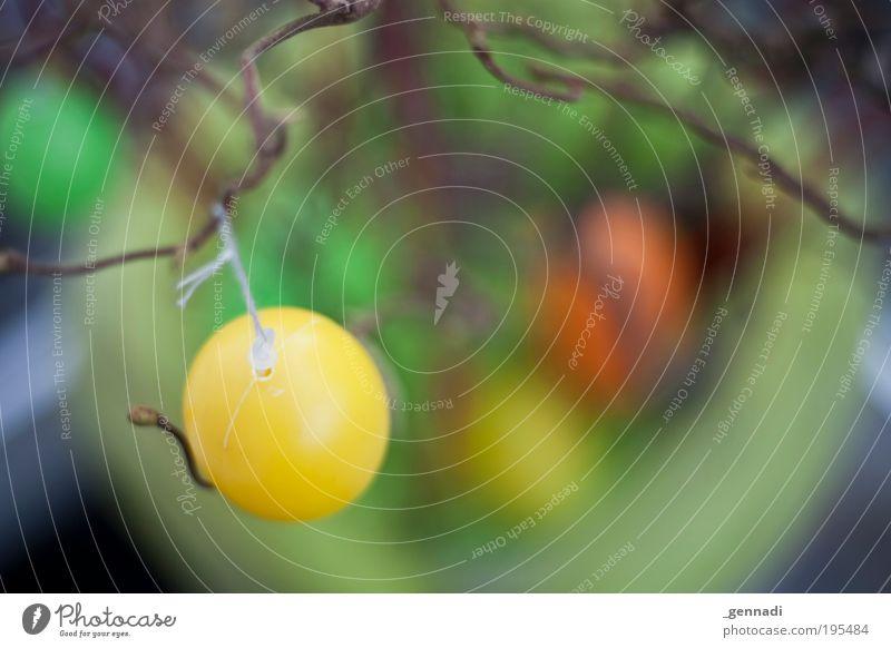 Ostern kann kommen Wachstum Suche Dekoration & Verzierung Ei hängen Osterei