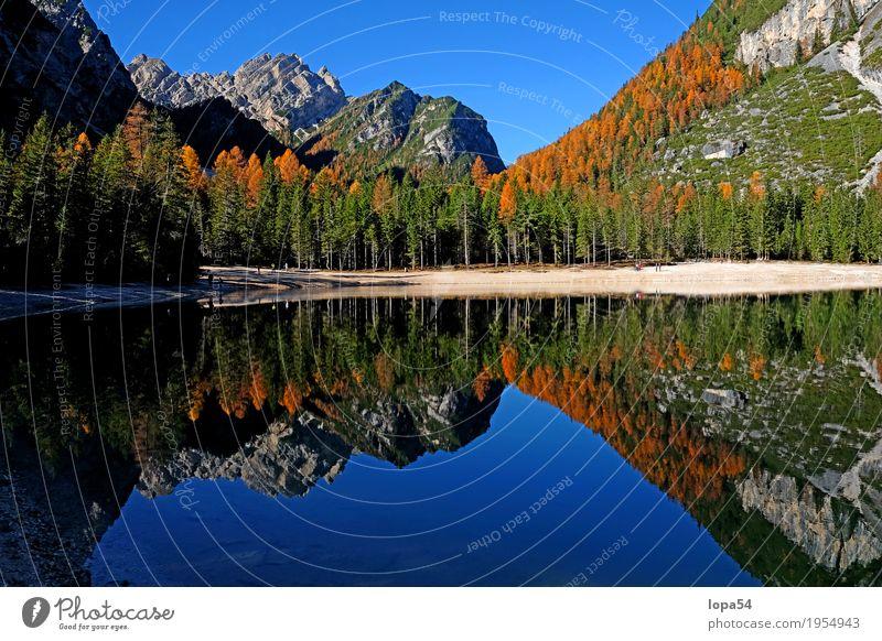 Herbststimmung am Pragser Wildsee, Dolomiten, Südtirol Umwelt Natur Landschaft Wasser Himmel Wolkenloser Himmel Sonnenlicht Schönes Wetter Baum Lärche Felsen