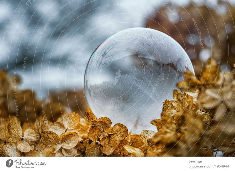 Seifenblase im Frostmantel 2 Natur Pflanze Winter Wetter Eis Schnee frieren glänzend liegen leuchten ästhetisch außergewöhnlich fantastisch fest schön braun