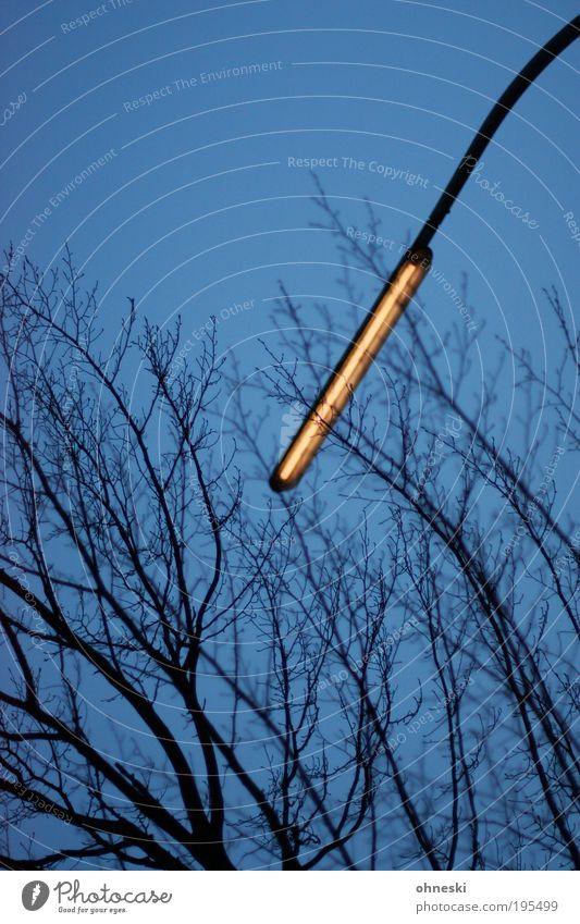 Leuchte Umwelt Natur Himmel Wolkenloser Himmel Klima Baum Ast Laterne Straßenbeleuchtung dunkel Farbfoto Außenaufnahme Menschenleer Textfreiraum oben Abend