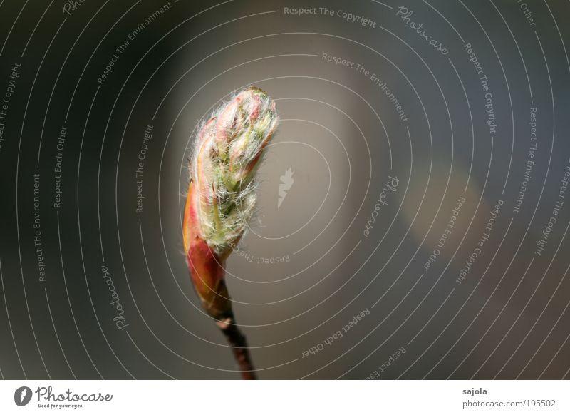 auf den frühling Natur Pflanze Frühling neu zart Blüte Blütenknospen aufwachen Frühlingsgefühle Erneuerung