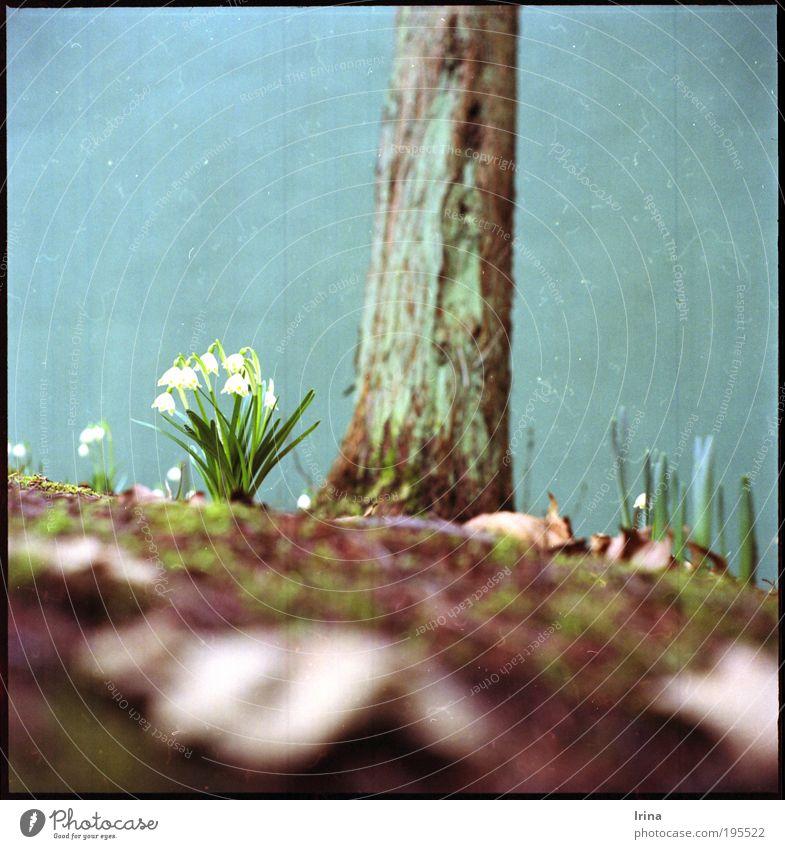 Mein erstes Mittelformat! weiß grün Baum Blume Blatt Blüte braun retro analog Bochum Scan Nordrhein-Westfalen Zypresse Ruhrgebiet Fussel