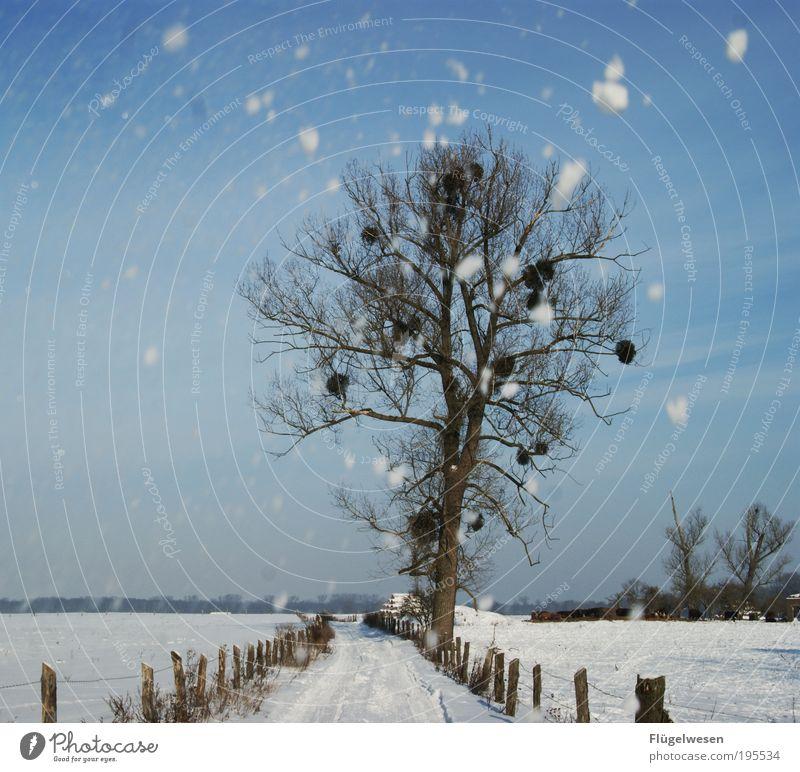 Wintertime Ferien & Urlaub & Reisen kalt Schnee Schneefall Wetter Coolness Klima frieren Klimawandel schlechtes Wetter Winterurlaub Endzeitstimmung