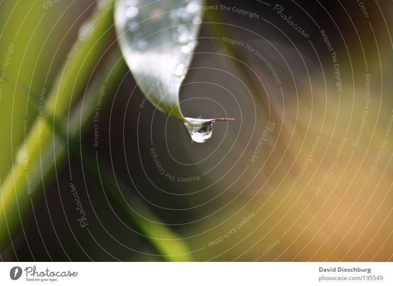 Nach dem Regen Leben harmonisch Natur Pflanze Wassertropfen Frühling Sommer Blatt Grünpflanze grün silber nass feucht Halm Stengel Farbfoto Außenaufnahme