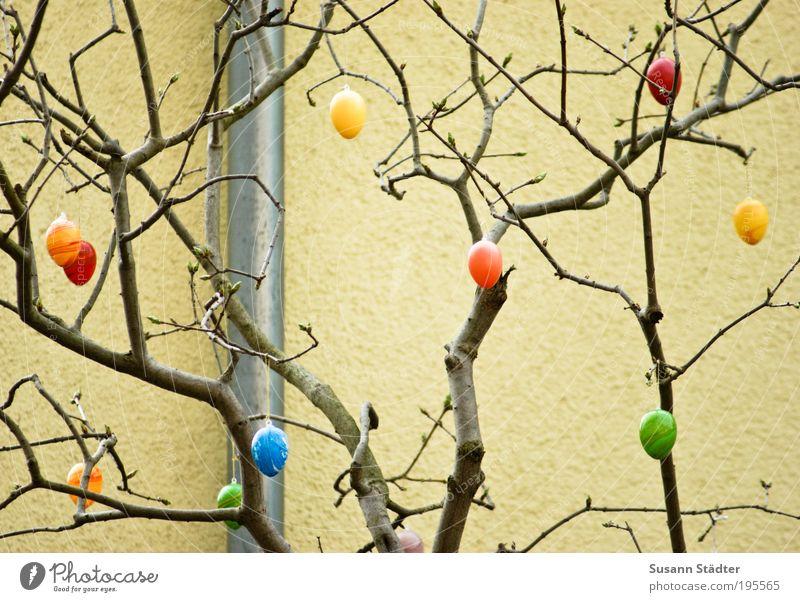 Eikaramba grün Baum gelb Wand Dekoration & Verzierung Ostern streichen verstecken hängen Haushuhn Feiertag Rohrleitung Nest Versteck