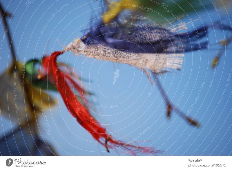 Ein Hauch von Tibet Glück Sommer Wolkenloser Himmel Sonnenlicht Schönes Wetter Wind Baum Dekoration & Verzierung Zeichen Fahne Bewegung Erholung fliegen